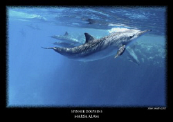 spinner dolphin - dolphin house reef canon 18-55 by Stewart Smith