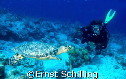 Close encounter with a Hawksbill Turtle at Salt Cay by Ernst Schilling