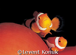 Under Protection  by Levent Konuk