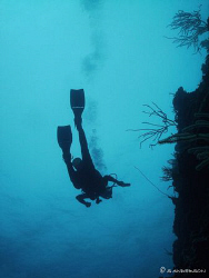 My wife as she swims along a wall in Roatan in search of ... by Steven Anderson