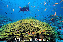Tiran Islands by Levent Konuk