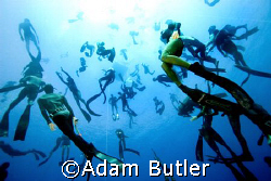 Free divers come down on mass to look at my camera. by Adam Butler