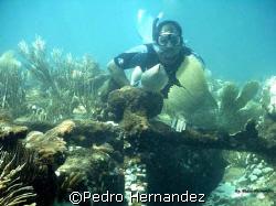 My Good Amigo Israel With a Anchor in Vieques Puerto Rico by Pedro Hernandez