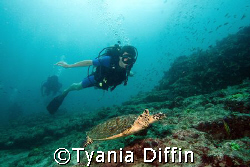 Diver follows a small Hawksbill female. by Tyania Diffin
