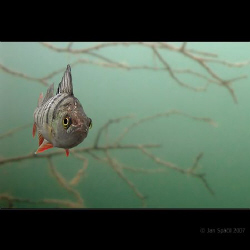 No pasaran! :)
