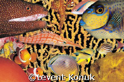 Fish Soup by Levent Konuk
