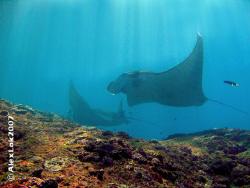 this picture take at manta point - nusa penida  water te... by Alex Lok