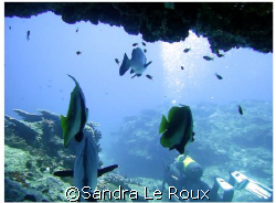 Taken at Sodwana, South Africa while swimming under a ledge. by Sandra Le Roux