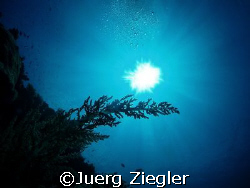 Beautiful Coral in the Sun Light ...