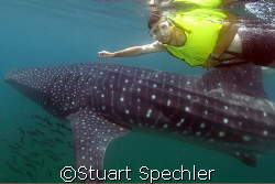 I think there's something in the water.   Swimmer with w... by Stuart Spechler