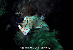 Lonely Risbecia, Bida Nok, Phi Phi Islands. Canon Powersh... by Tobias Reitmayr