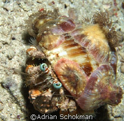 Peek Ka Booo - Taken at Mabul Island - Olympus E-330 by Adrian Schokman