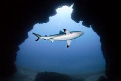 Shark Cave by Jim Garland