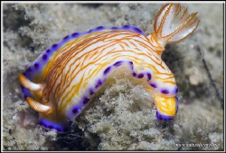 Nudi lovers here is a new one for you to look for on your... by Yves Antoniazzo