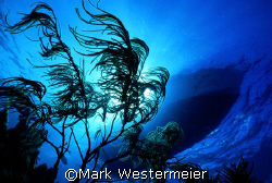 Image of dive boat taken near Key Largo with a Nikonos V,... by Mark Westermeier