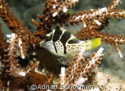 Taken at Mabul Island - Olympus E-330 by Adrian Schokman