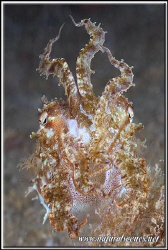 One beauty to dive for!!!.....350D/70mm by Yves Antoniazzo