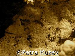Stoned Fish... by Petra Kuzev