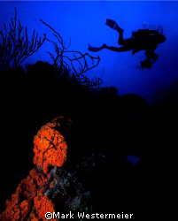 Searching for Photos - Image taken in Bonaire with a Niko... by Mark Westermeier