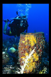 Sharon and sponge,