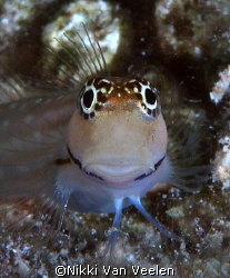 Blenny taken at Sharksbay with E300 and 105mm lens.