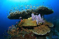 Nusa Penida, a small island between Bali and Lombok. EOS... by Arthur Telle Thiemann