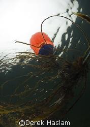 Mooring buoy. Steam's town bay. Connemara. D200, 10.5mm. by Derek Haslam