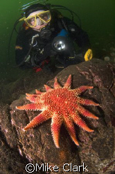 Diver viewing vibrant sunstar. nikon d70 with 10.5mm lens... by Mike Clark