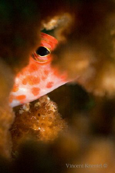 Fish hiding in coral, La Paz, Mexico by Vincent Kneefel
