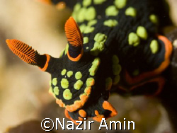 Taken at Tioman Island, Malaysia. by Nazir Amin