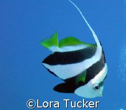 Finding Nemo by Lora Tucker