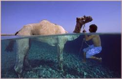 camel's safari by Ran Marom