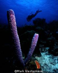Off Exploring - Image taken in Bonaire with a Nikonos V, ... by Mark Westermeier