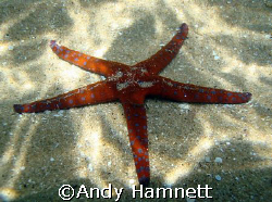 Seastar in shallow water. Sony DSC W90. by Andy Hamnett