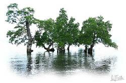 """Mangroves in front of """"our"""" beach in Pantar. EOS5D by Arthur Telle Thiemann"""