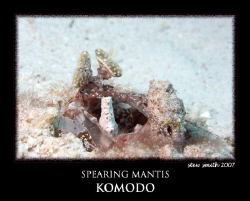 spearing mantis shrimp - 60mm canon by Stewart Smith