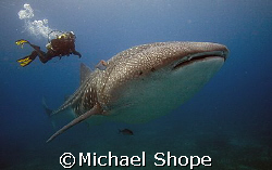 Dive Master and Mr. Big by Michael Shope