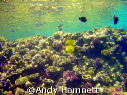 Sublime beauty! Panorama Reef in Safaga, Egypt. Sony DSC ... by Andy Hamnett