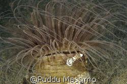manado Lembeh Strait,nikon d2x 10,5 mm by Puddu Massimo