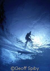 surfer by Geoff Spiby