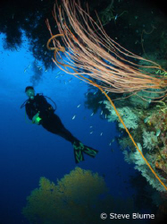 My Little Mermaid, yes another fun shot from PNG this tim... by Steve Blume