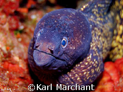 moray suprise... by Karl Marchant