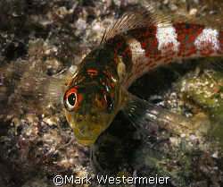 Personality - Image taken in Bonaire with a Nikonos RS, 5... by Mark Westermeier