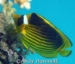 Picking away at the coral.Sony DSC W90.  by Andy Hamnett