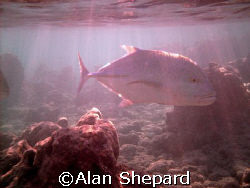 Just a pic I like of Jacks hunting in the morning.  Taken... by Alan Shepard