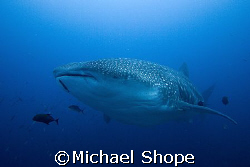 Big Fish, Big Fun!!! by Michael Shope