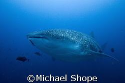 Big Fish, Big Fun!!! by Michael Shope