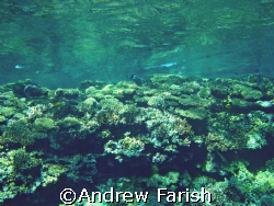 shallow reef by Andrew Farish