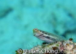 taken in redang island. by Walter Chong