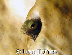 Peek-a-boo by Juan Torres